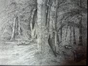 """Emma Karney - Seit vielen Jahren bin ich begeisterte Hobbymalerin und arbeite zumeist in Aquarelltechniken. Als Naturliebhaberin habe ich einen Blick für die Schönheiten und Besonderheiten unserer heimatlichen Umgebung. Deshalb habe ich seit einiger Zeit begonnen, solche heimatlichen Motive in unterschiedlichen Techniken malerisch zu gestalten. Das abgebildete Motiv """"Herbst am Ringberg"""" ist eine Bleistiftzeichnung."""